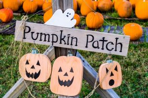 A pumpkin patch as one of the things to do for Halloween in Miami