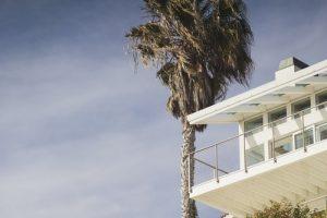House balcony and palm