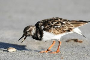 Top places for families in South Florida. Bird and a shell.