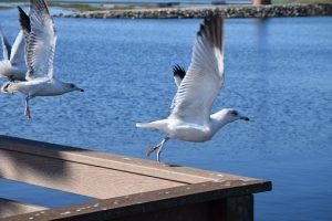 Seagull on Florida beach