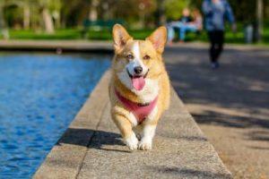 Pasea a tu perro regularmente y conocerás gente nueva