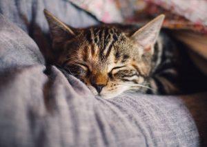 A cat sleeping