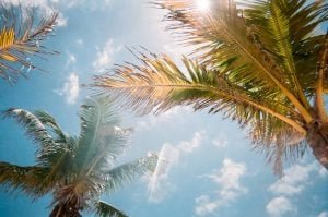 The most charming cities in Florida- palm trees