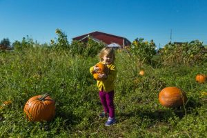 Children love Pupmpkin Patches to visit this fall in Florida