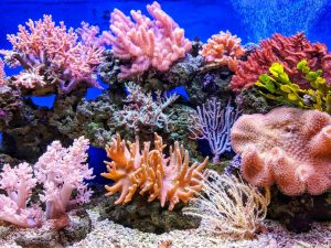 RV routes in FL worth exploring- a coral reef