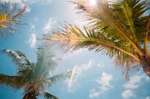 clear sky with two palm tree branches