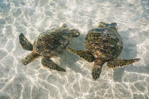 watching two turtles as one of things to do in Broward County