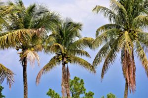 Pompano Beach boasts many wonderful characteristics.