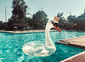 white swan floater in the pool