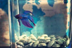 A small fish inside a small aquarium